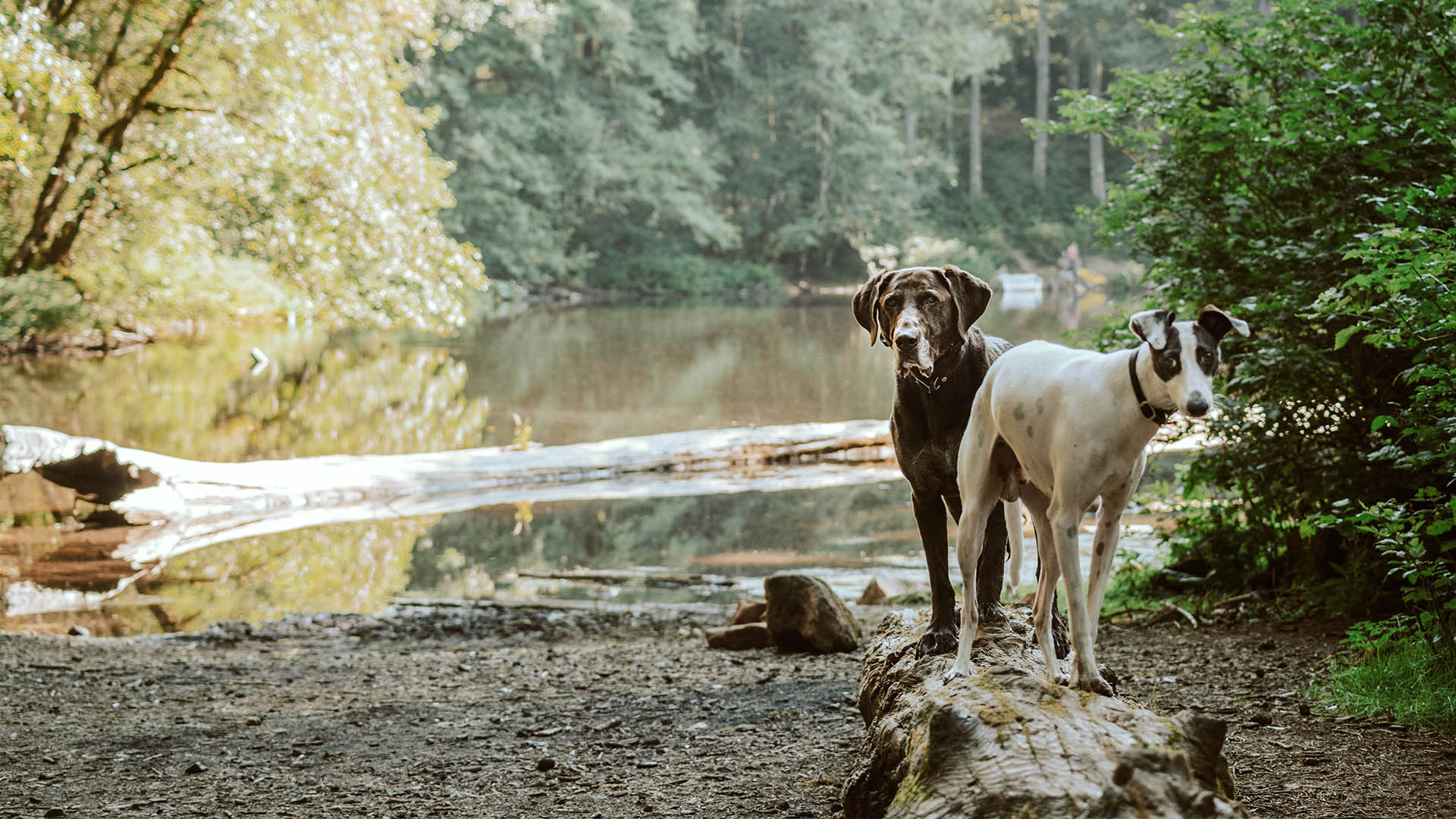 6 of Europe's best four-legged-friendly hotels for travels with your dog