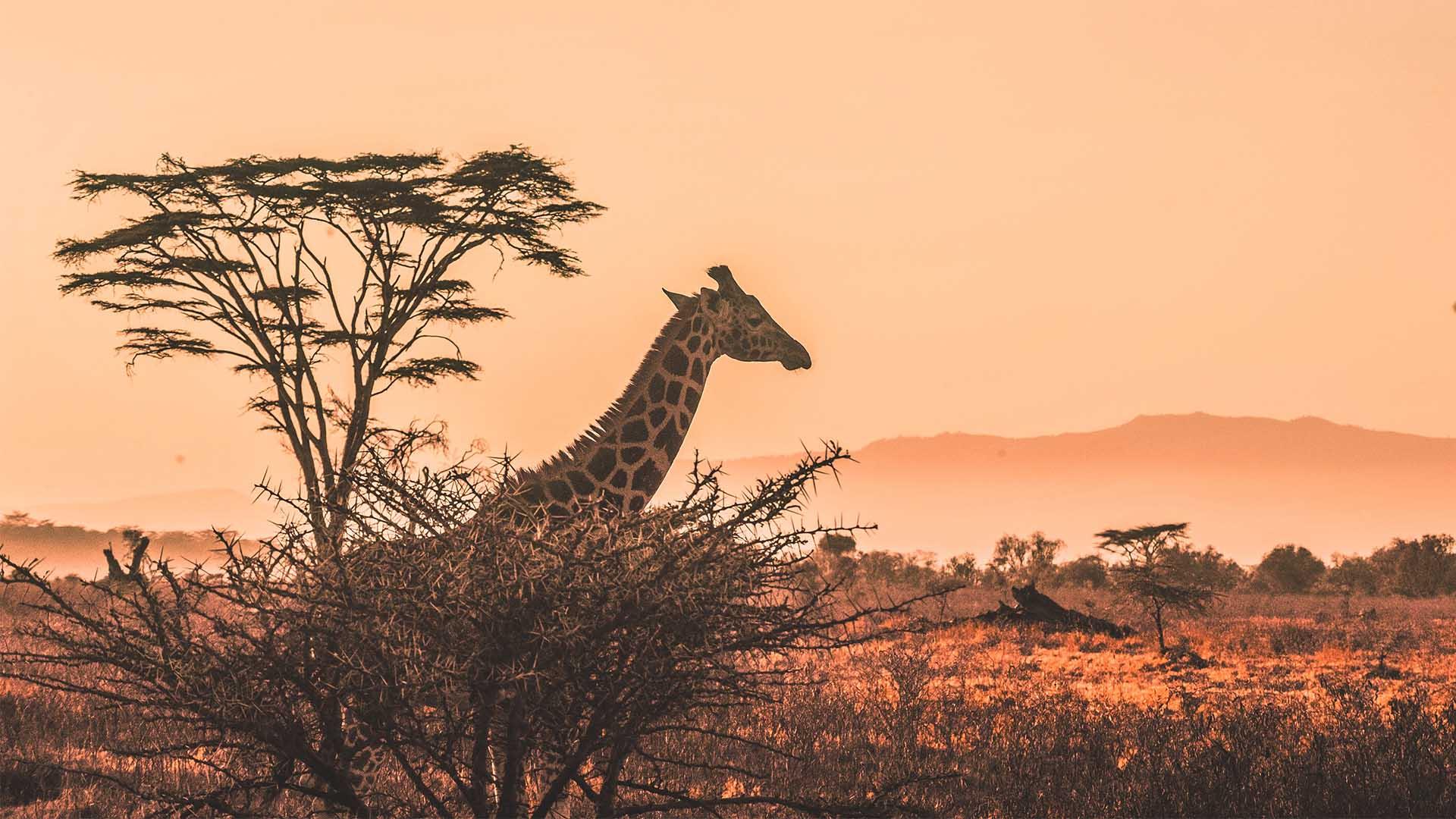 A fresh spin on safari