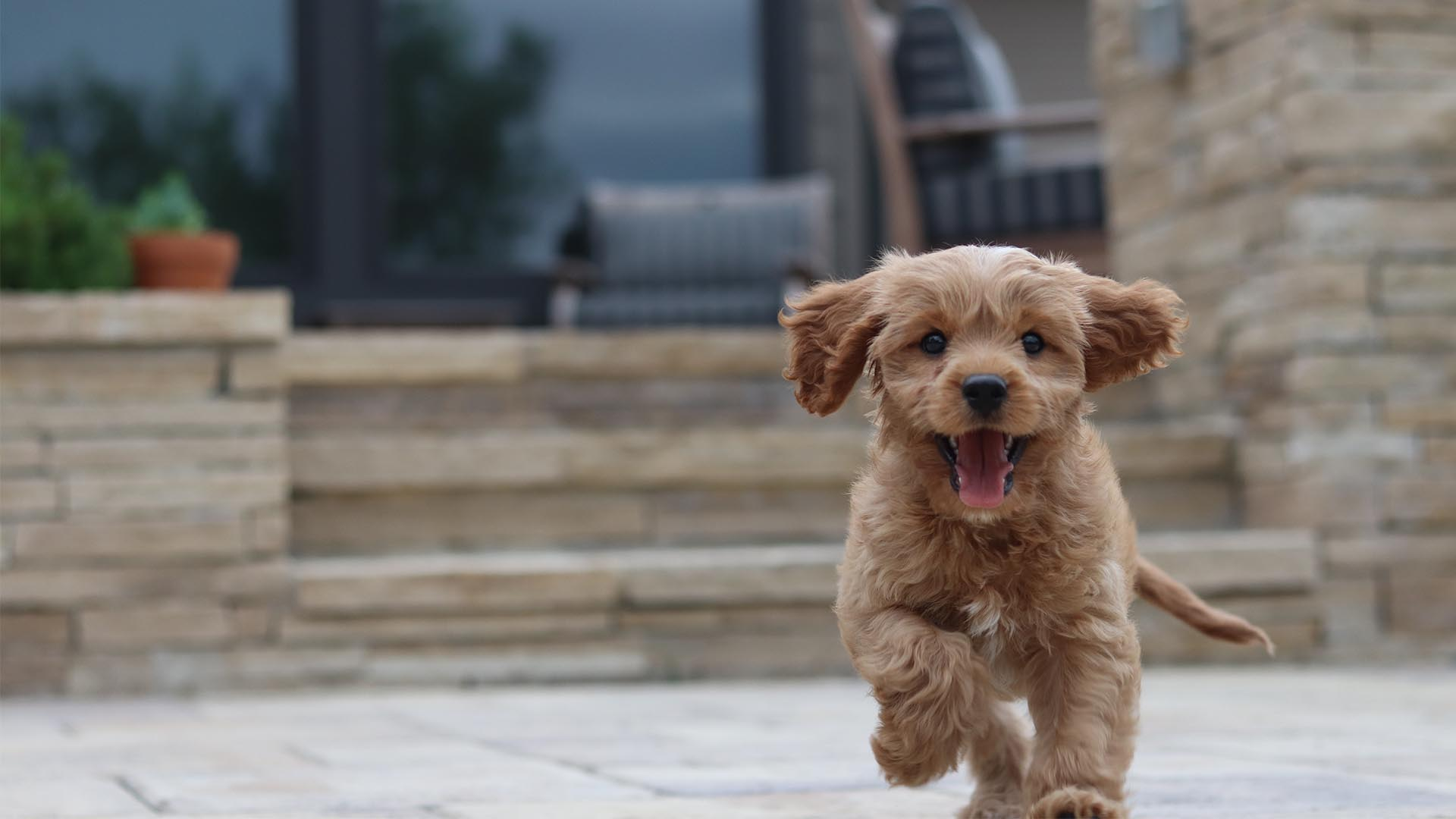 10 of the best dog-friendly hotels in the UK
