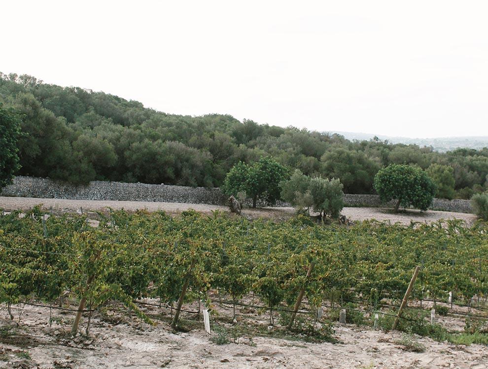 Finca Serena, Mallorca